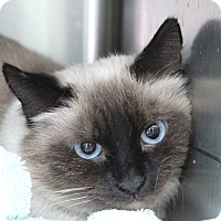 Adopt A Pet :: Cuddles - Warwick, RI