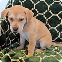 Adopt A Pet :: Kona - Brunswick, ME