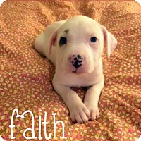 Adopt A Pet :: Faith - Tracy, CA
