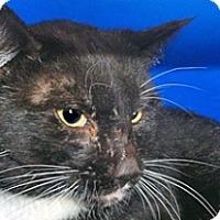 Adopt A Pet :: 339548 - Wildomar, CA