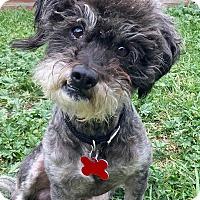 Adopt A Pet :: Nobu - San Pedro, CA