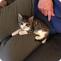 Adopt A Pet :: Hunter - Butner, NC