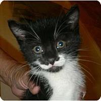 Adopt A Pet :: Batimo - lake elsinore, CA