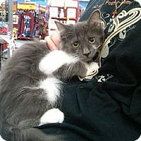 Adopt A Pet :: Luna - Sterling Hgts, MI