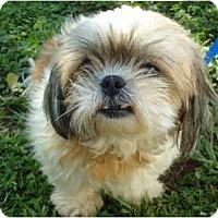 Adopt A Pet :: Sierra - Plainfield, CT