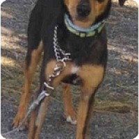Adopt A Pet :: Rascal - Toronto/Etobicoke/GTA, ON