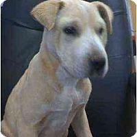 Adopt A Pet :: Leota - Scottsdale, AZ