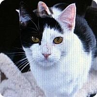 Adopt A Pet :: Oreo - Binghamton, NY
