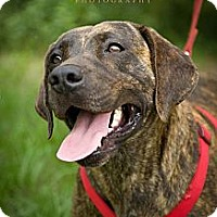 Adopt A Pet :: Taylor - Fort Valley, GA