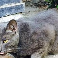Adopt A Pet :: Tommy S - San Jose, CA