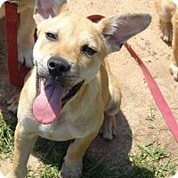 Adopt A Pet :: Manny - Lebanon, CT