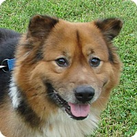 Adopt A Pet :: Kodiak *HW Positive needs sponsor* - Erwin, TN