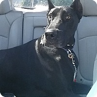Adopt A Pet :: Dozer - Grand Haven, MI