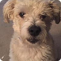 Adopt A Pet :: Chico - Saskatoon, SK