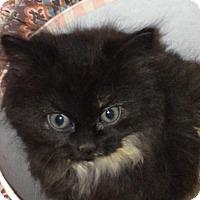 Adopt A Pet :: Jojo - Jackson, NJ