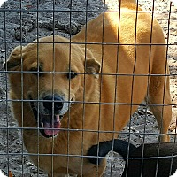 Adopt A Pet :: Sonic - Okeechobee, FL