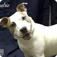 Adopt A Pet :: Audrie - Laplace, LA