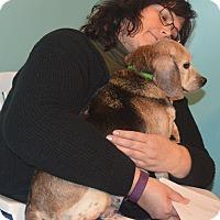 Adopt A Pet :: Rosanna - Prole, IA