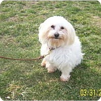 Adopt A Pet :: CHARMIN - Rossford, OH