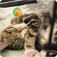 Adopt A Pet :: Peanut - Riverside, RI