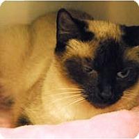 Adopt A Pet :: Belle - Lunenburg, MA