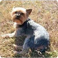 Adopt A Pet :: Toby - Gulfport, FL
