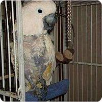 Adopt A Pet :: LUCY - Mantua, OH
