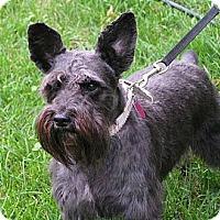 Adopt A Pet :: Missy - Rigaud, QC