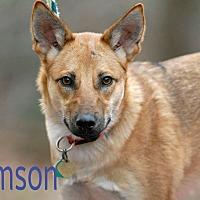 Adopt A Pet :: Samson - Pottsville, PA