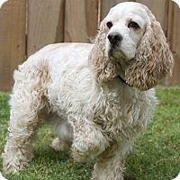 Adopt A Pet :: O'Malley - Sugarland, TX