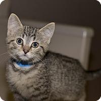 Adopt A Pet :: Rohan - Medina, OH