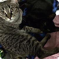 Adopt A Pet :: Jerry - Byron Center, MI