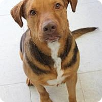 Hound (Unknown Type) Mix Dog for adoption in Yukon, Oklahoma - Cecil