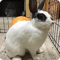English Spot Mix for adoption in Woburn, Massachusetts - Barnaby