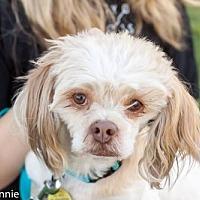 Adopt A Pet :: Benji - Tucson, AZ