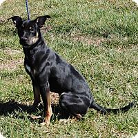 Adopt A Pet :: Ari - Parsons, KS
