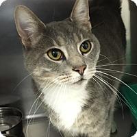 Adopt A Pet :: Miles - Warrenton, MO