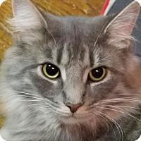 Adopt A Pet :: Heidi - Jeannette, PA