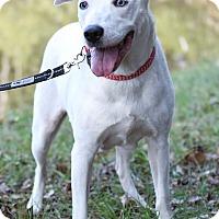 Adopt A Pet :: Chloe - Jacksonville, FL