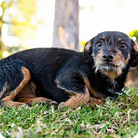Adopt A Pet :: JC - Santa Monica, CA