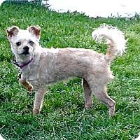 Adopt A Pet :: Dixie - Mount Pleasant, SC