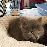 Adopt A Pet :: Hanson - Colorado Springs, CO