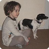 Adopt A Pet :: Meeko-Foster Home Needed - Seattle, WA