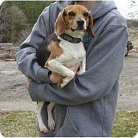 Adopt A Pet :: PENDINGBunny - Toronto/Etobicoke/GTA, ON