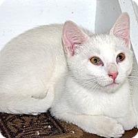 Adopt A Pet :: Otis - Xenia, OH