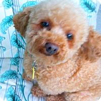 Adopt A Pet :: CHENEY - Melbourne, FL