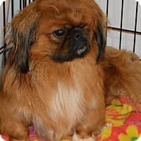 Adopt A Pet :: Jett - Prole, IA