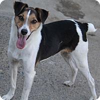 Adopt A Pet :: Archie - Yuba City, CA
