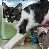 Adopt A Pet :: Molly - New York, NY