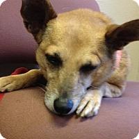 Adopt A Pet :: Erin - Garland, TX